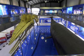 海洋博物馆实拍vr全景